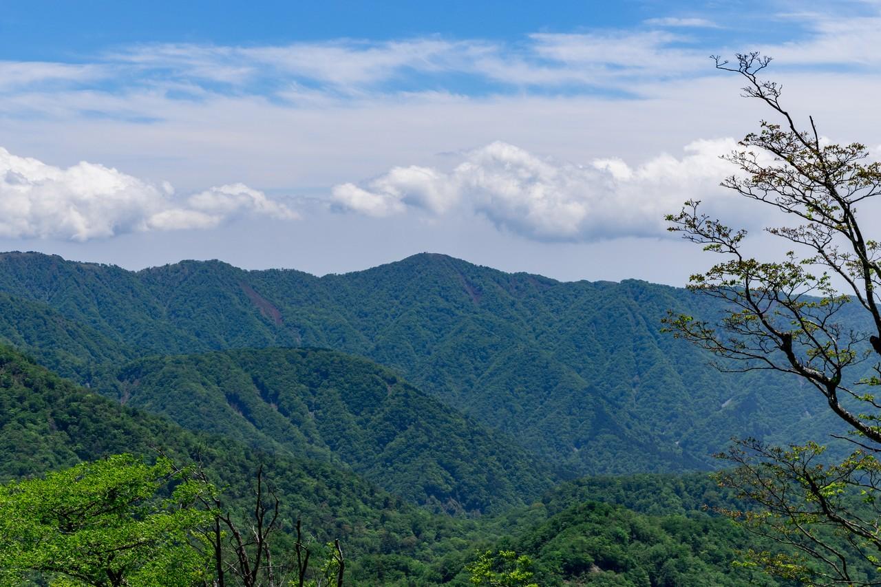 檜洞丸から見た塔ノ岳