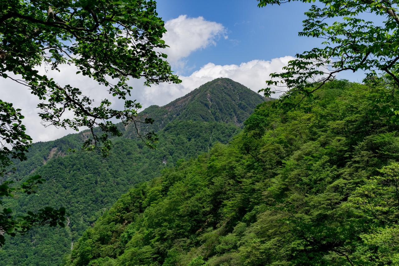 丹沢主稜縦走路から見上げた蛭ヶ岳