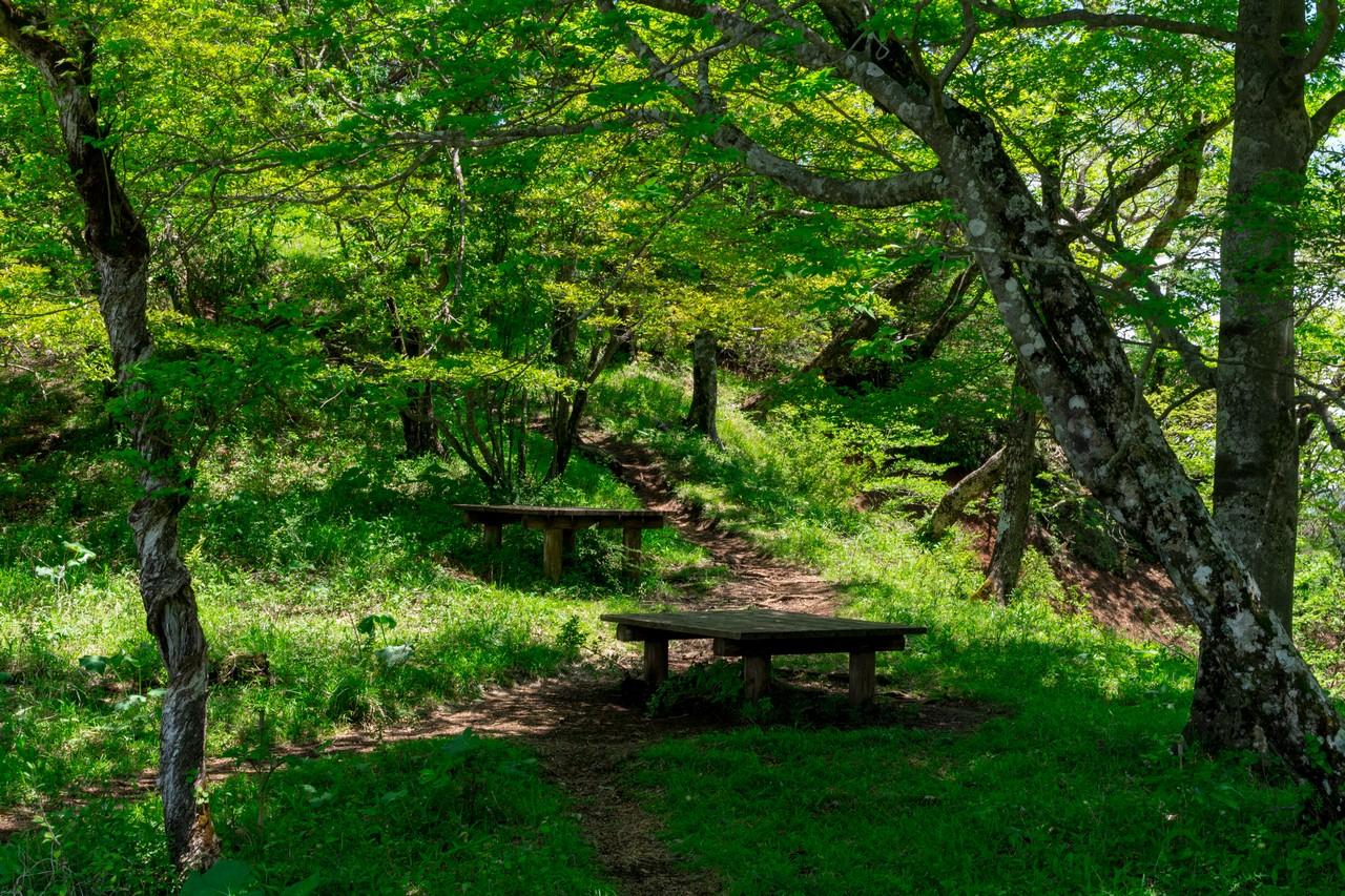 丹沢主稜縦走路のベンチ