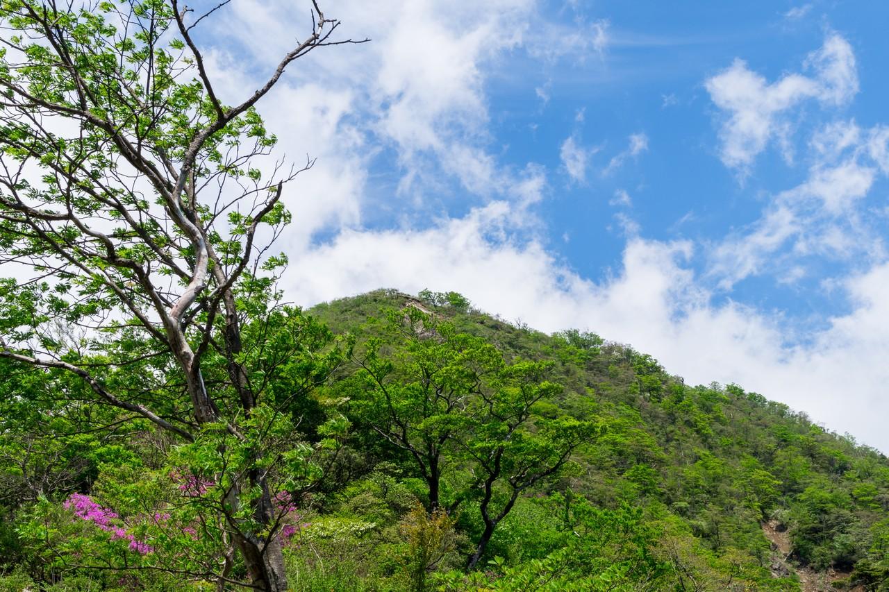丹沢主稜縦走路から蛭ヶ岳への登り