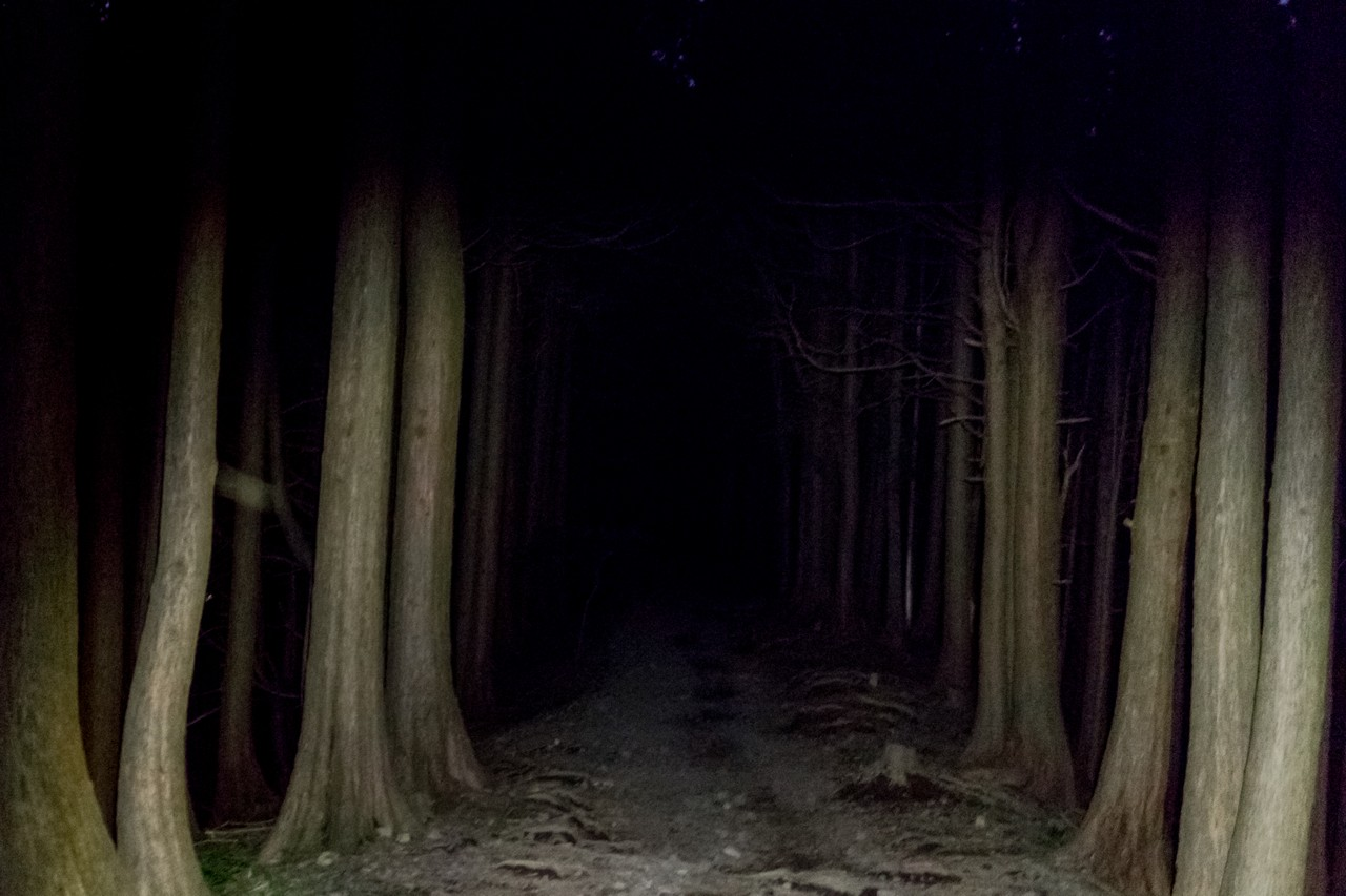 ヘッドランプに照らされた登山道
