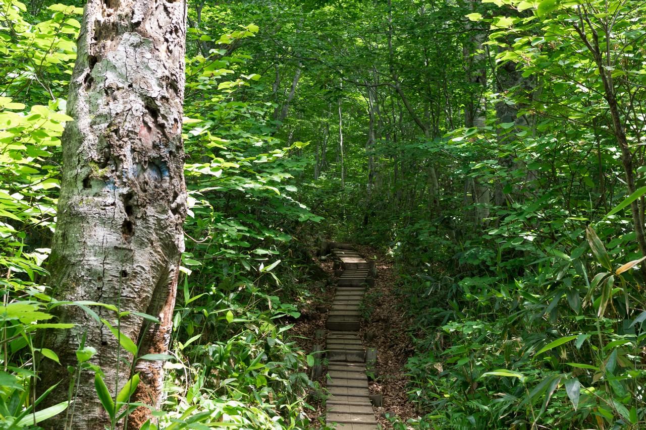 笹ヶ峰コースの登山道