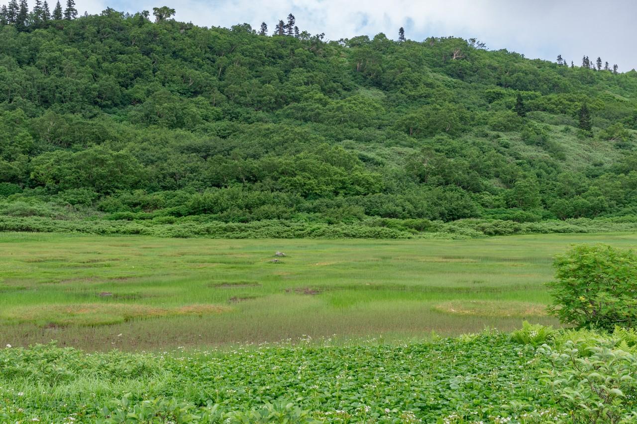 火打山の高野池
