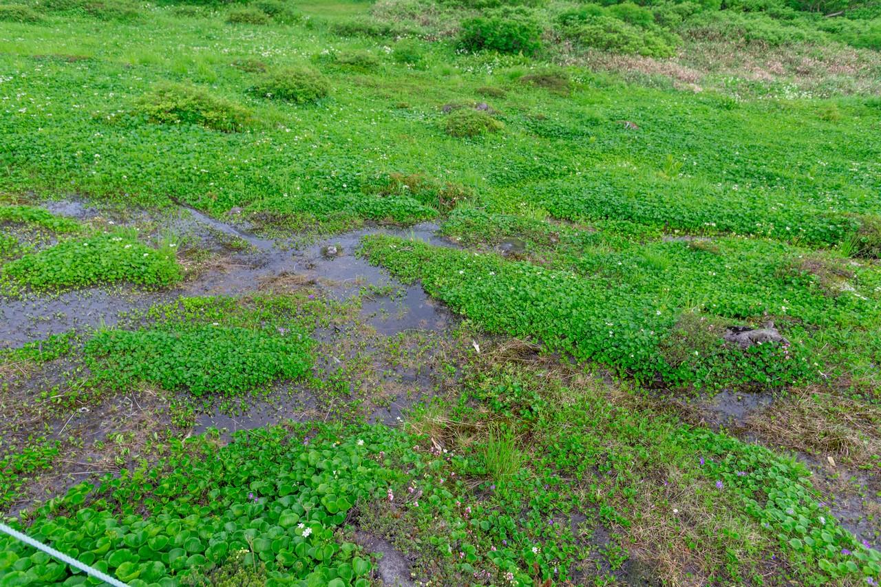 高谷池近くの湿地帯