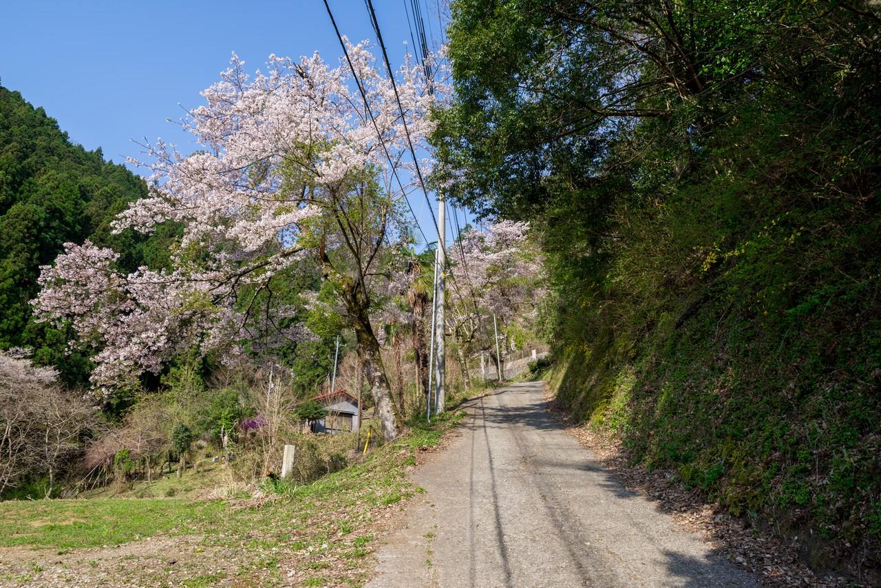 200406生藤山_024