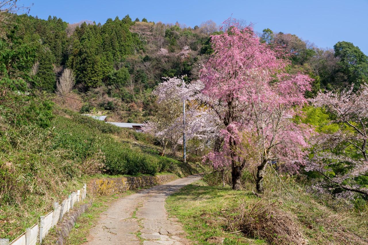 200406生藤山_029