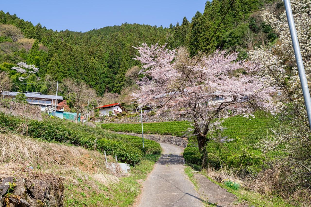 200406生藤山_031