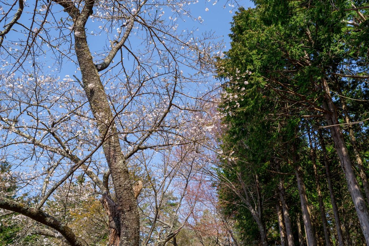 200406生藤山_043