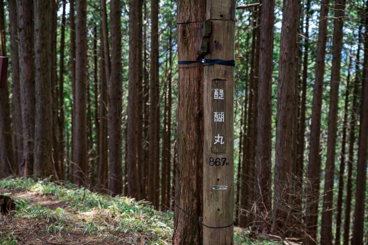 200406生藤山_085