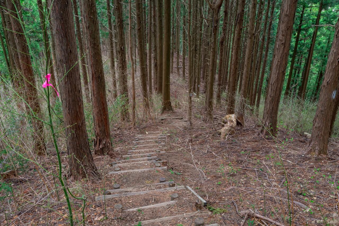 200406生藤山_087