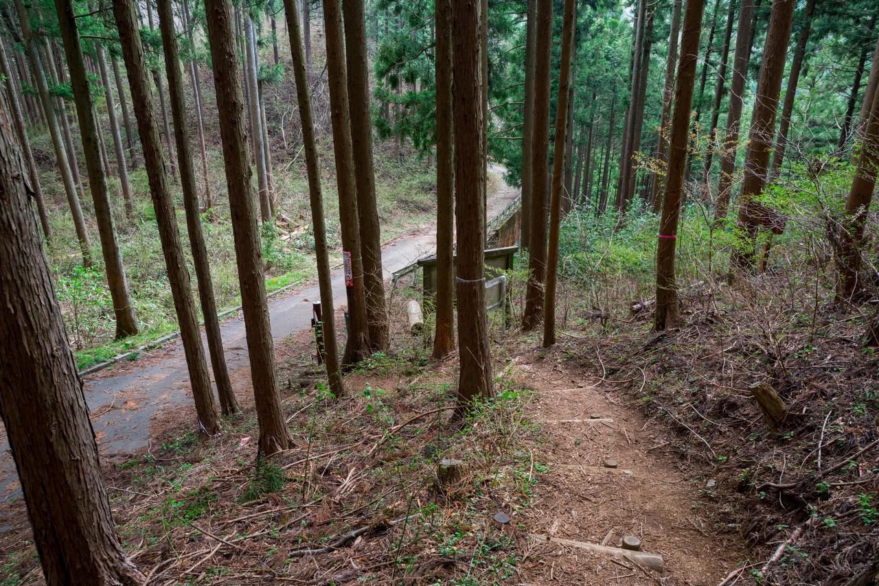 200406生藤山_088