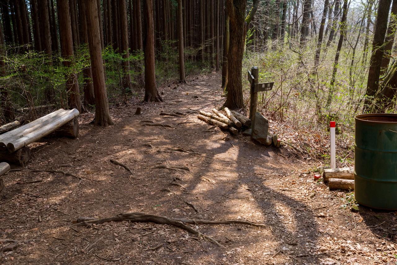 200406生藤山_101