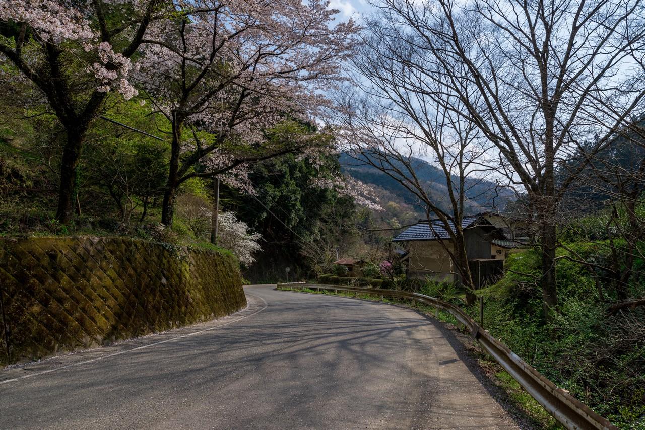 200406生藤山_107