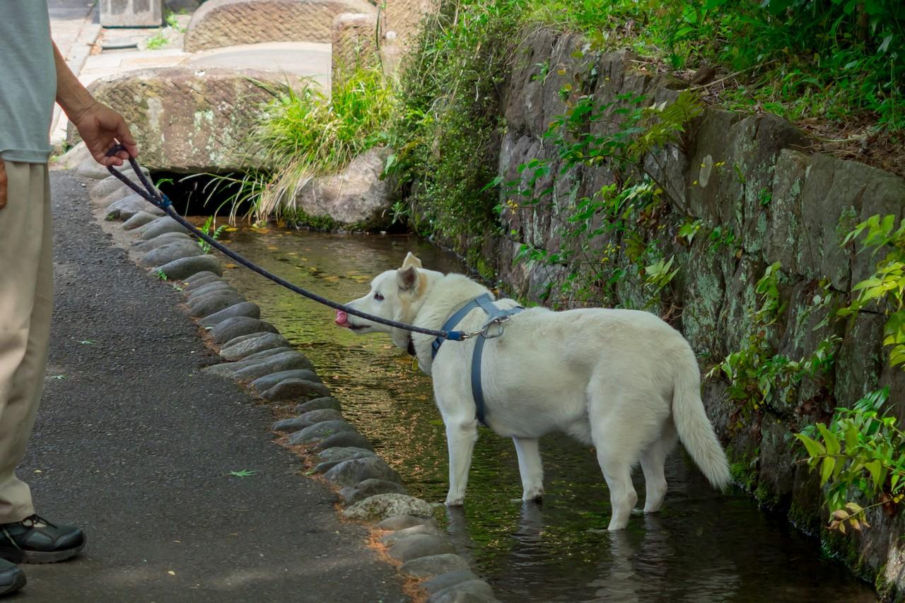 水路で遊ぶ犬