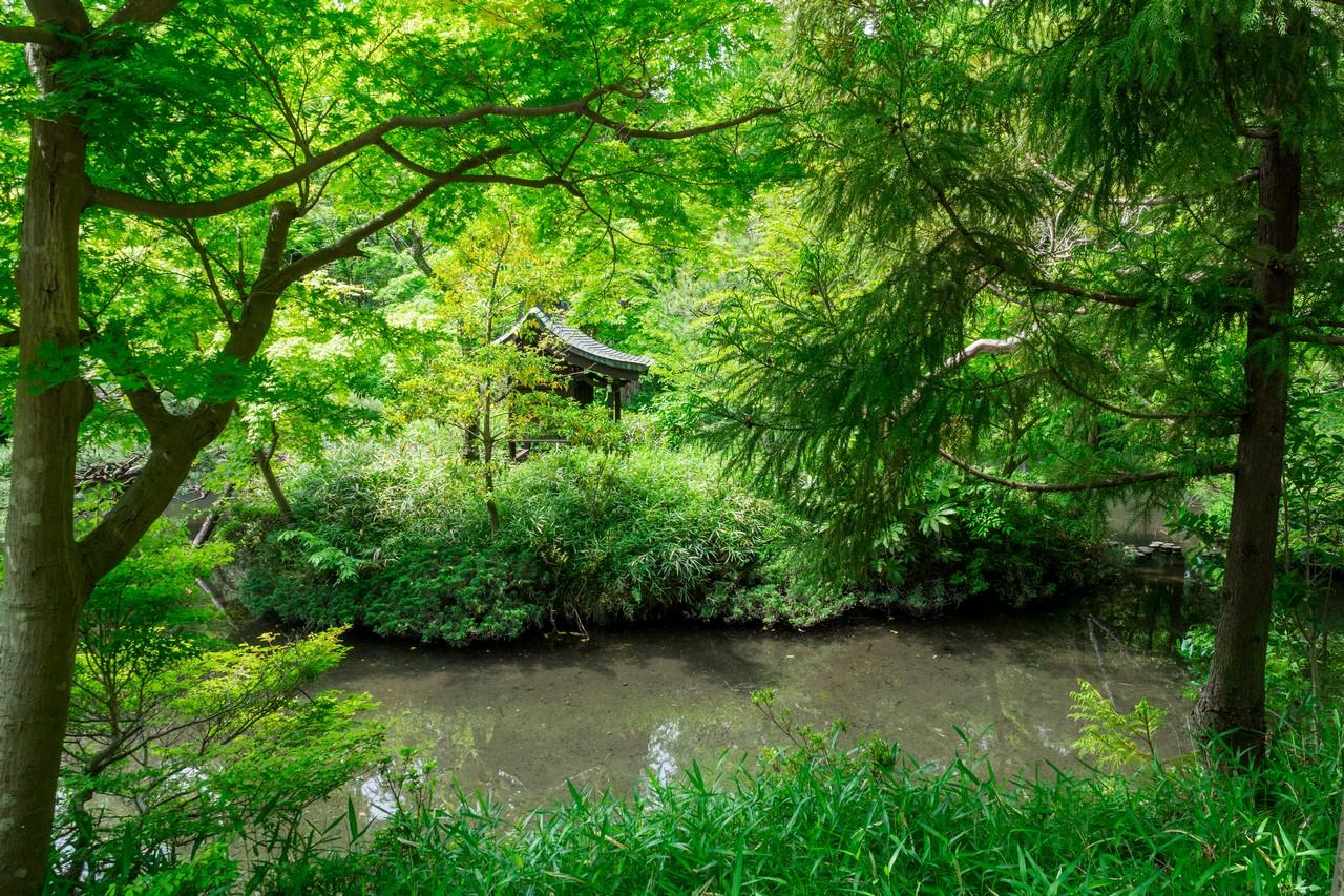 深大寺の弁天池