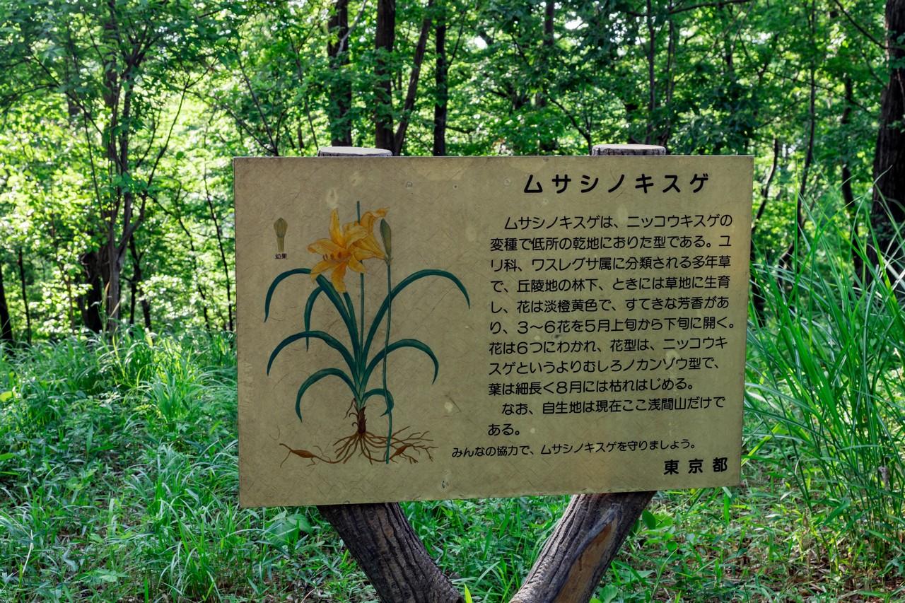 200508浅間山公園-004