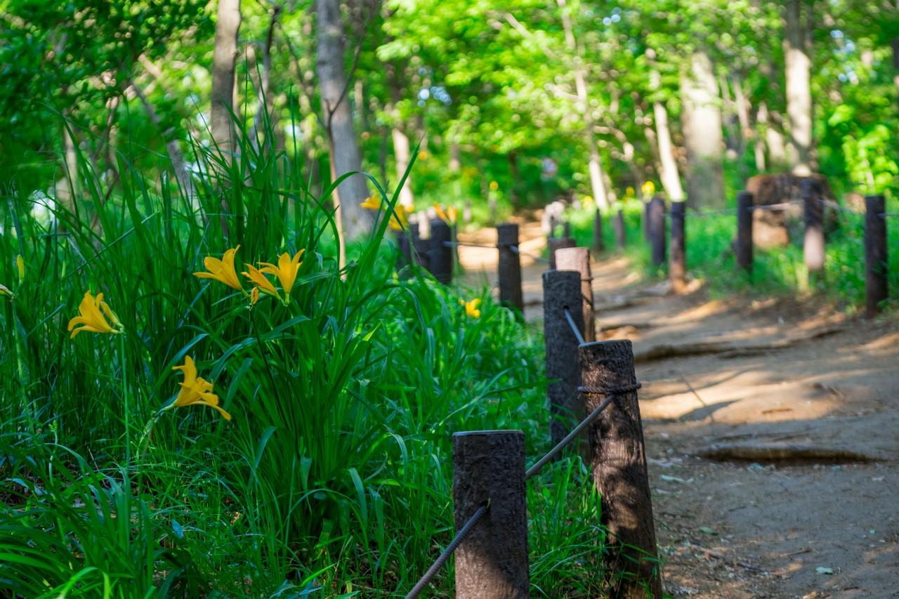 200508浅間山公園-005