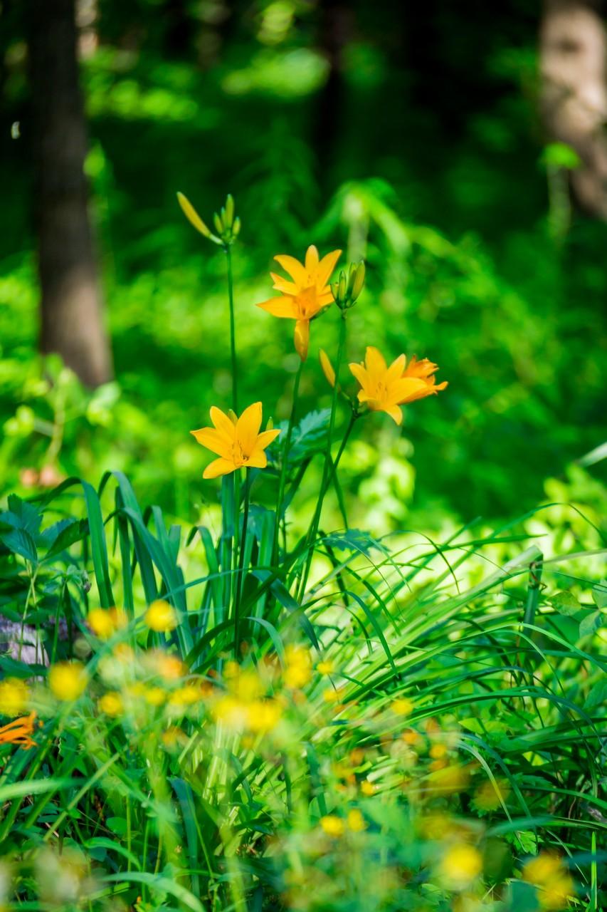 200508浅間山公園-027