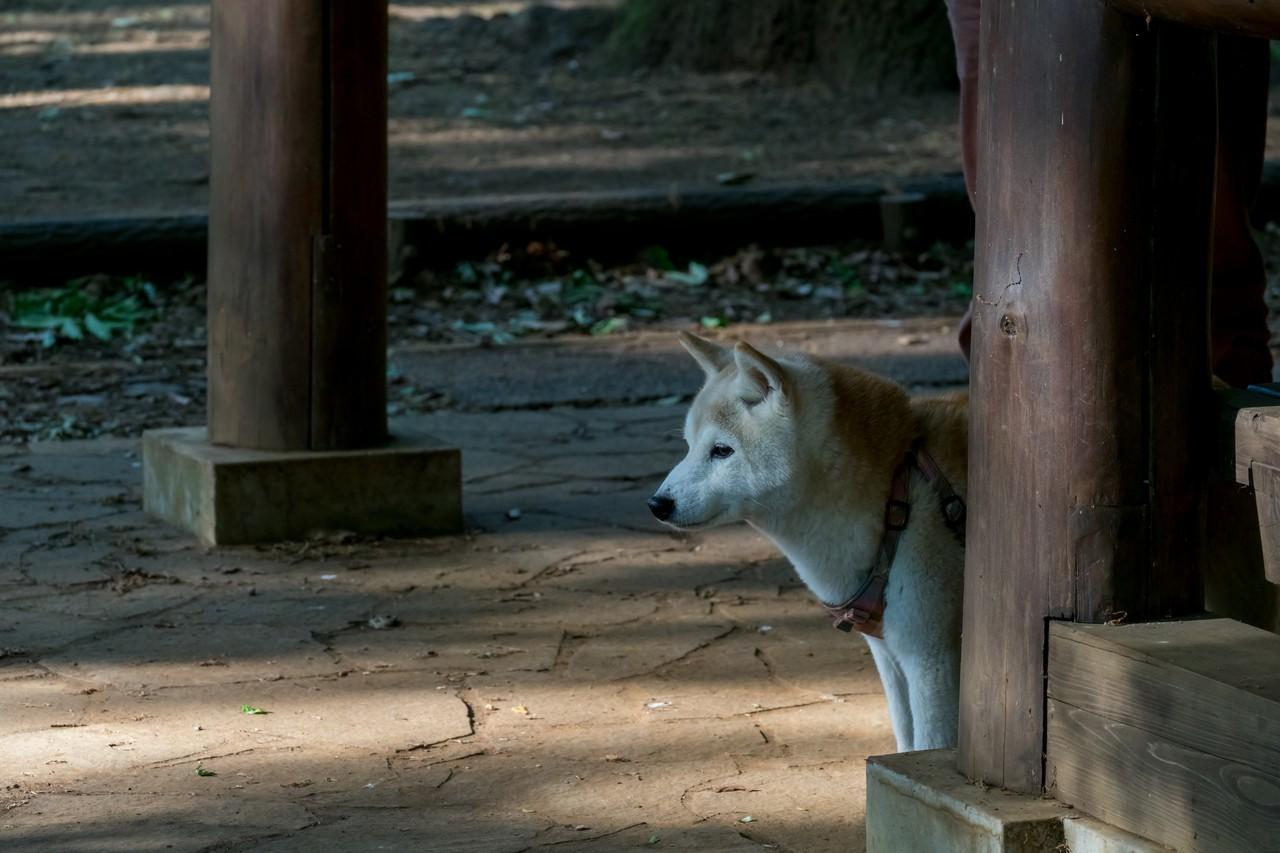 200508浅間山公園-029