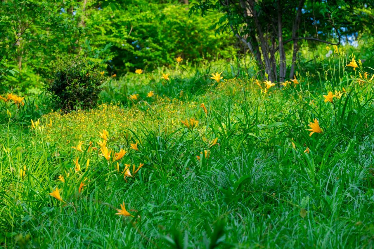200508浅間山公園-035
