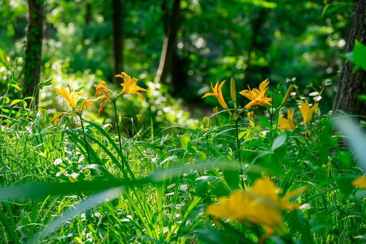 200508浅間山公園-036