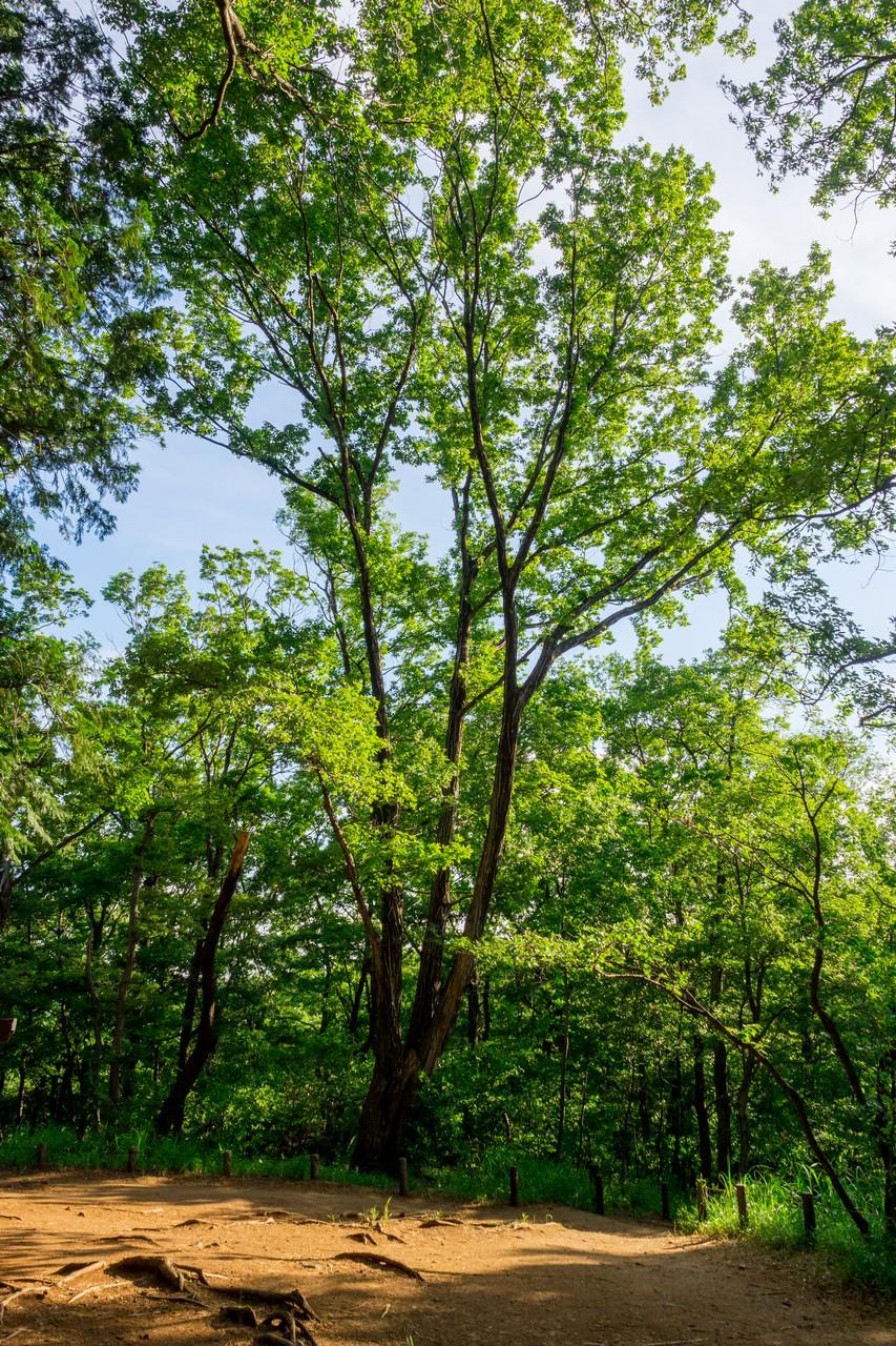 200508浅間山公園-046