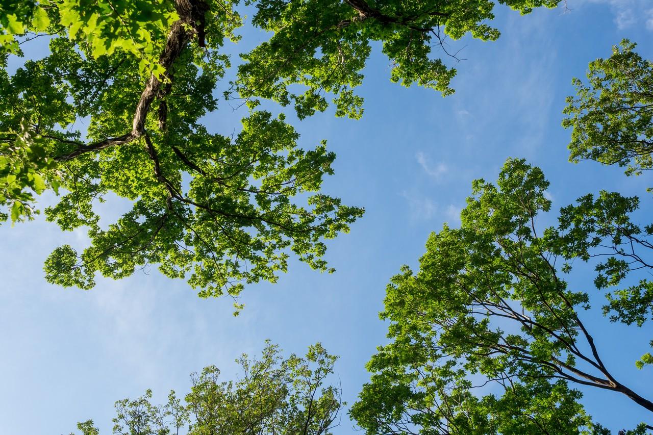 200508浅間山公園-047