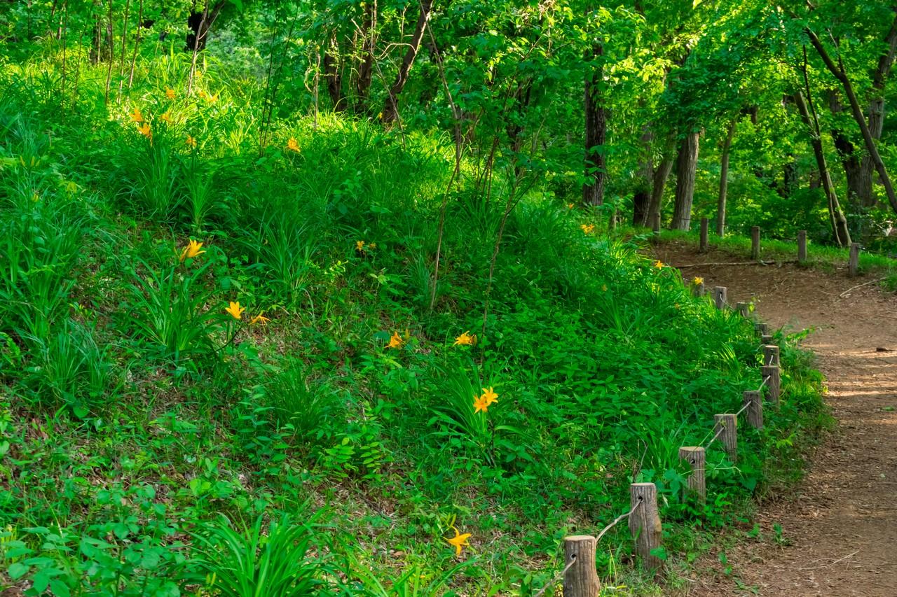 200508浅間山公園-052