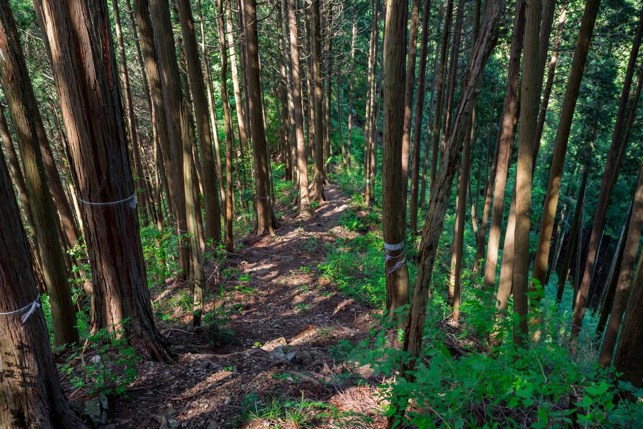 200524戸倉三山-088