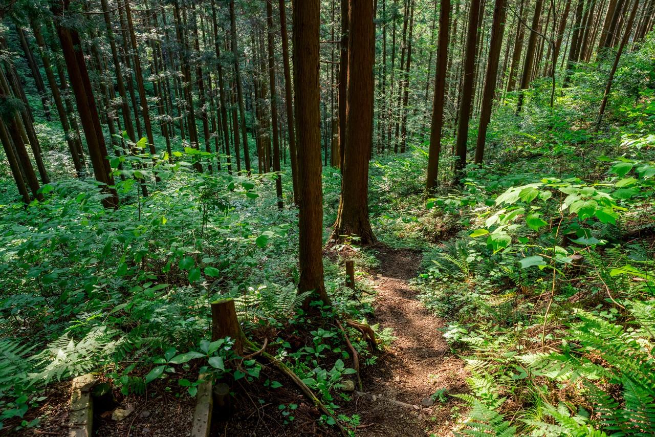 200524戸倉三山-102
