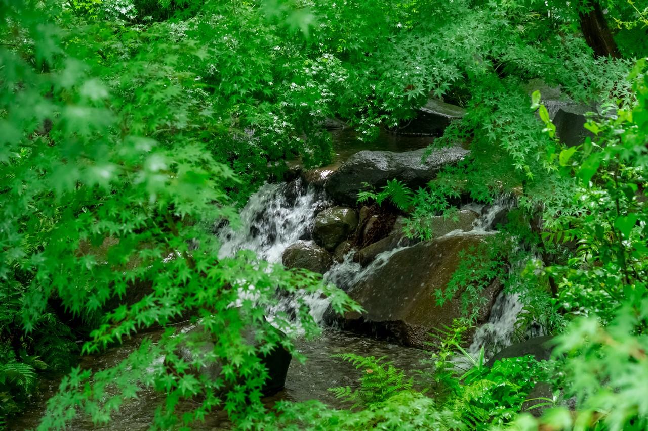 200614郷土の森_030