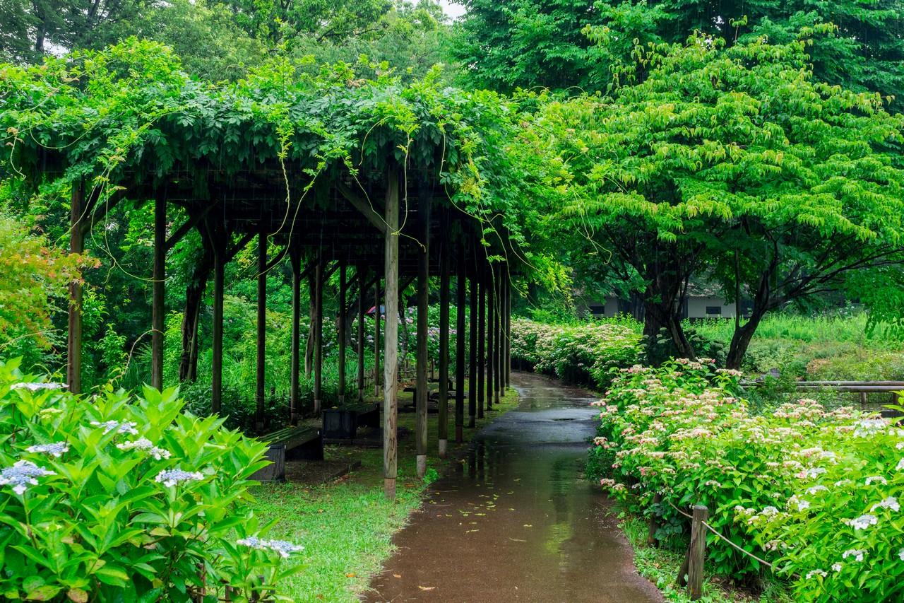 200614郷土の森_033