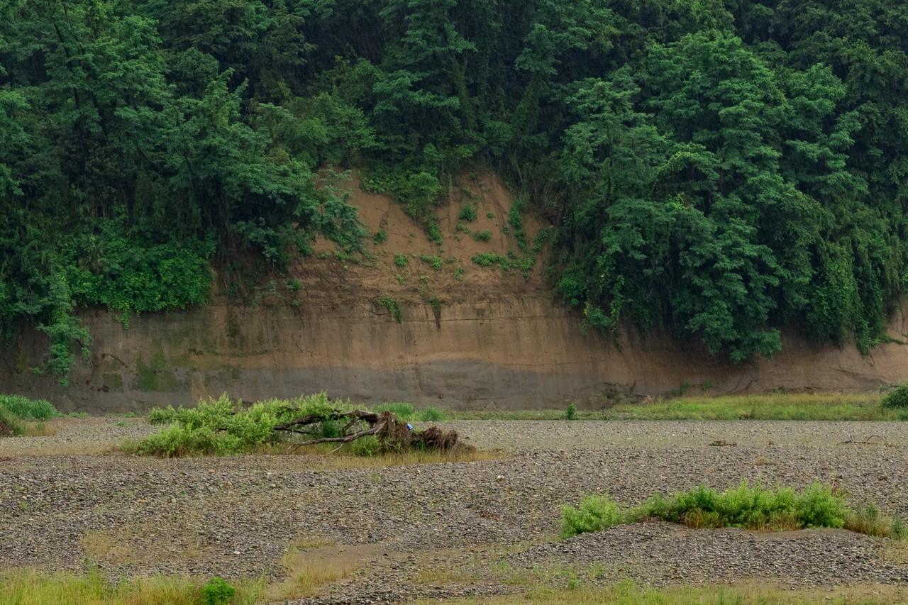 200614郷土の森_059