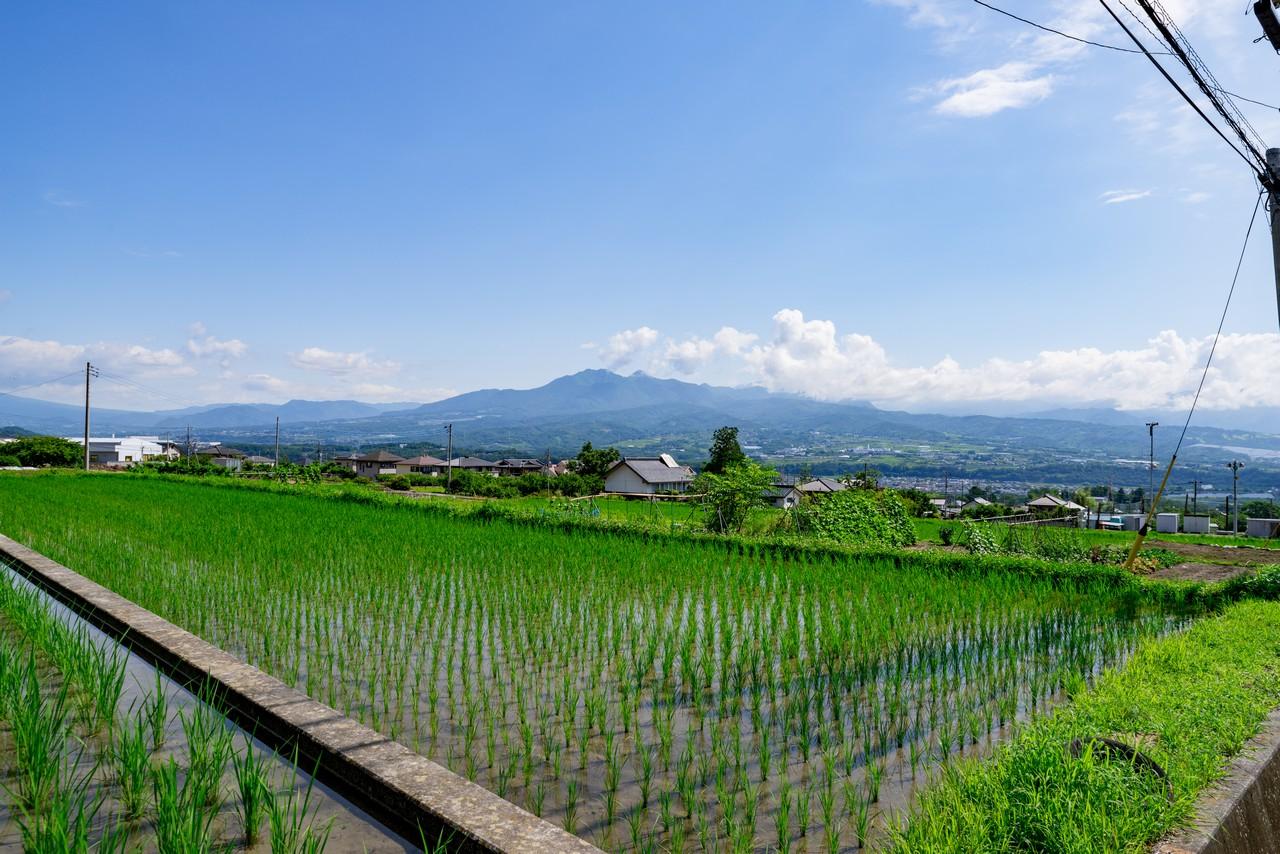 韮崎の棚田と茅ヶ岳
