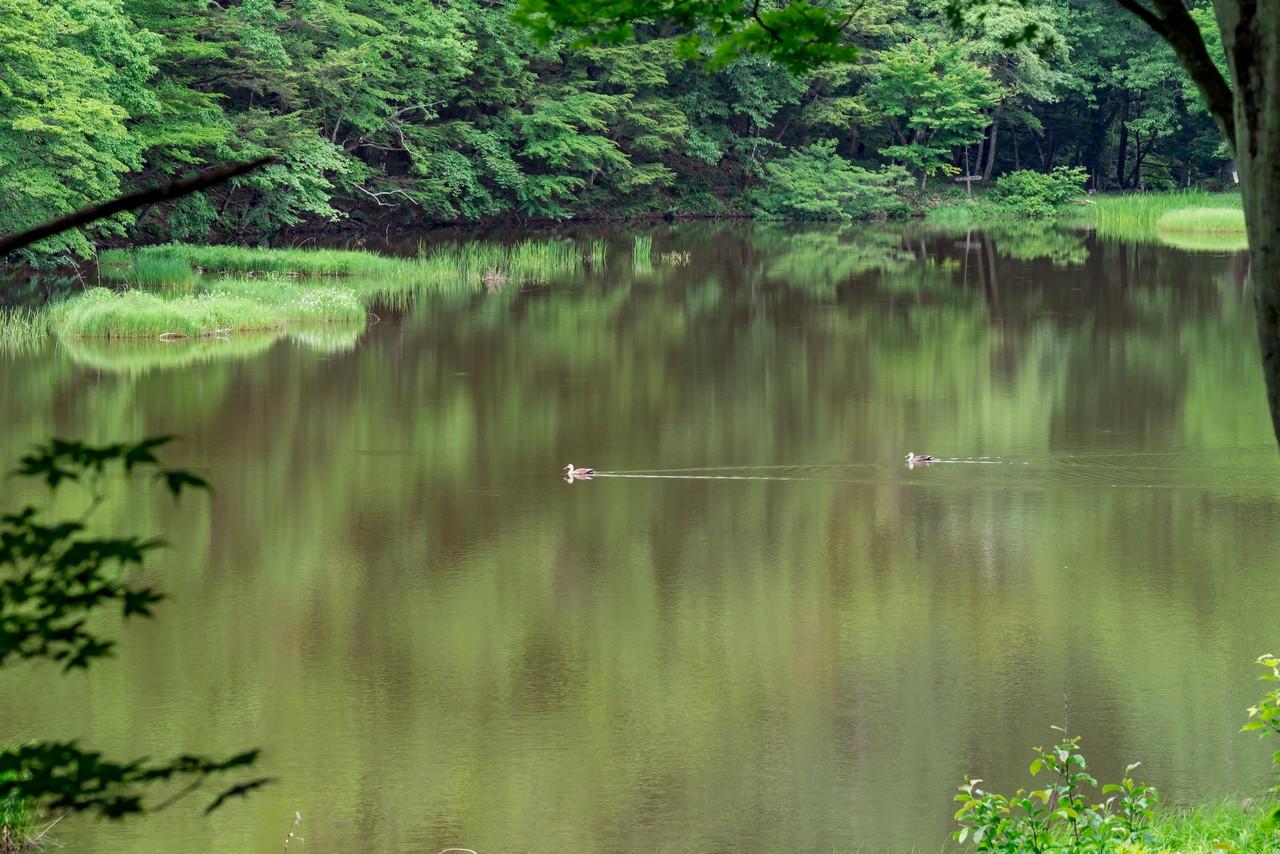 甘利山の椹池