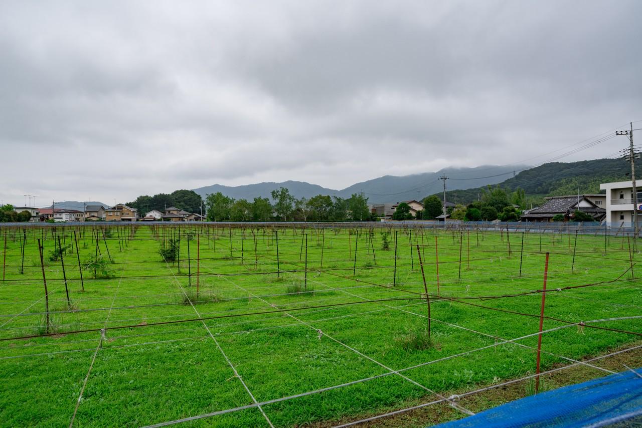 200705太平山-011