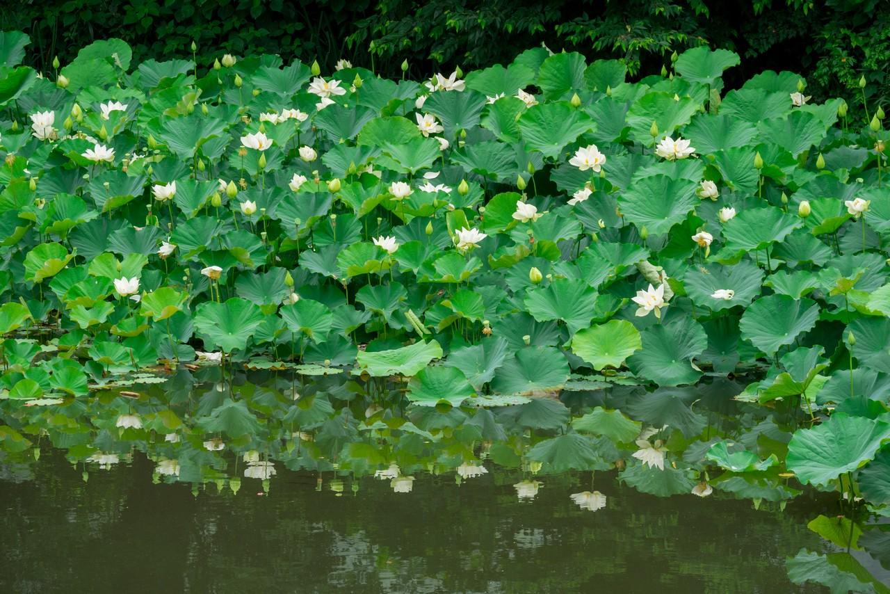 200705太平山-025