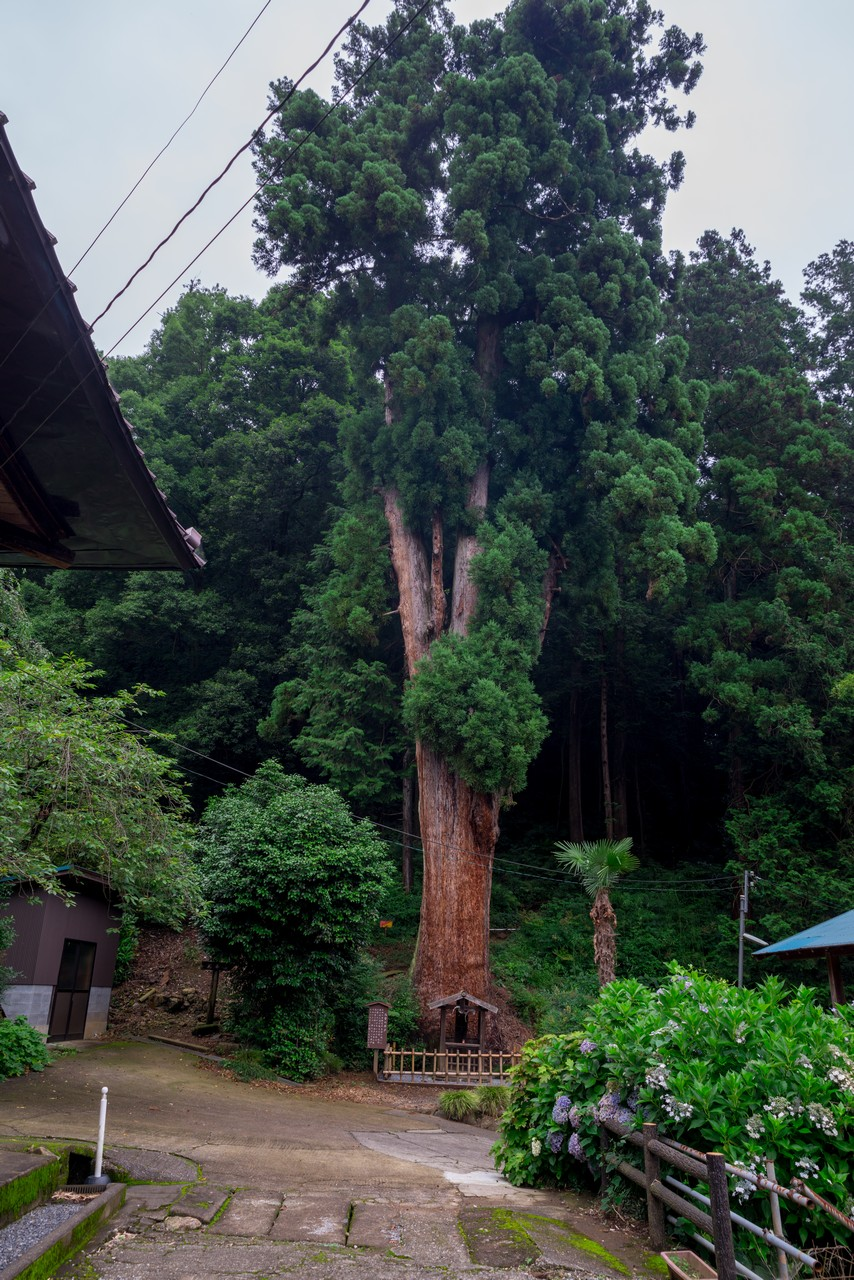 200705太平山-035