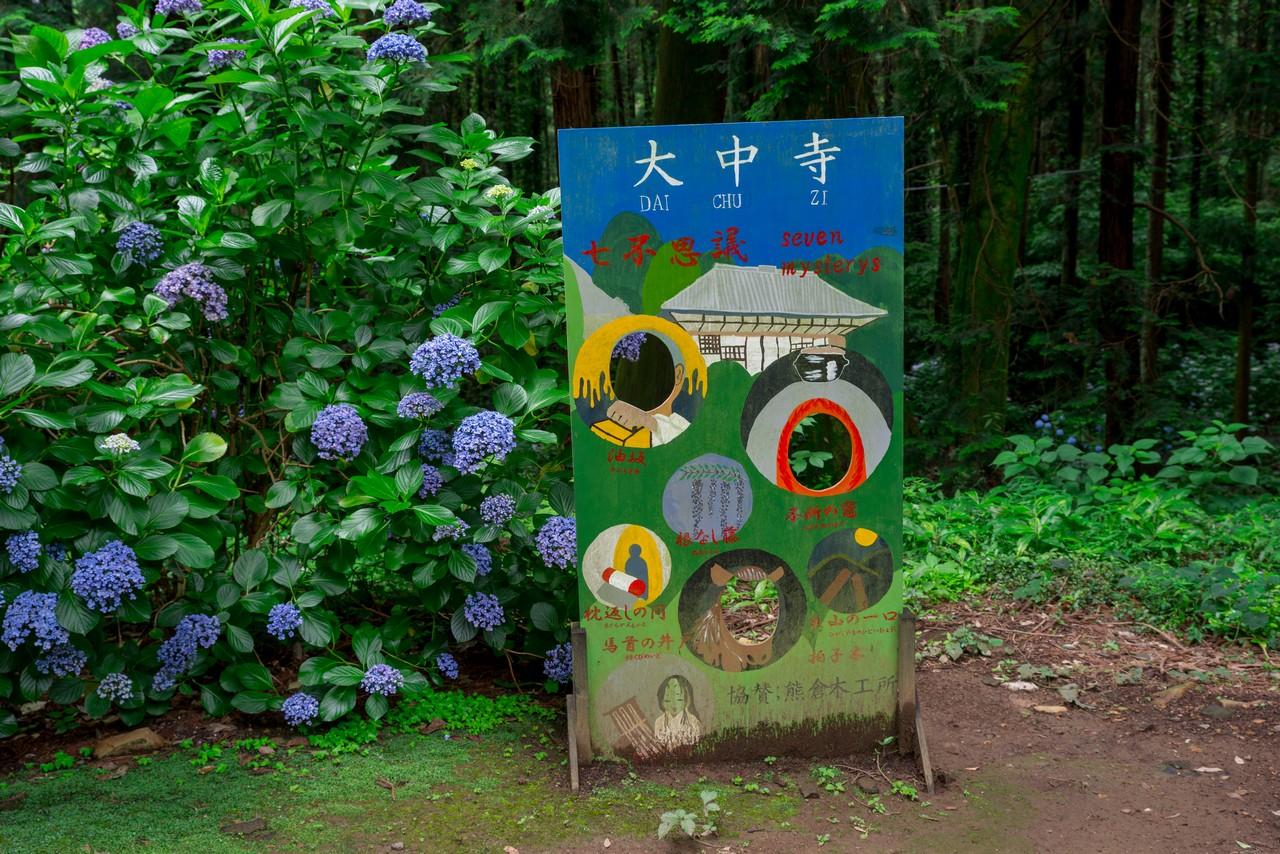200705太平山-036