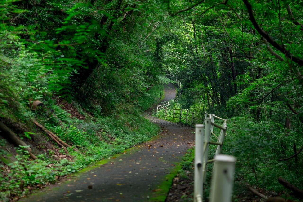 200705太平山-042