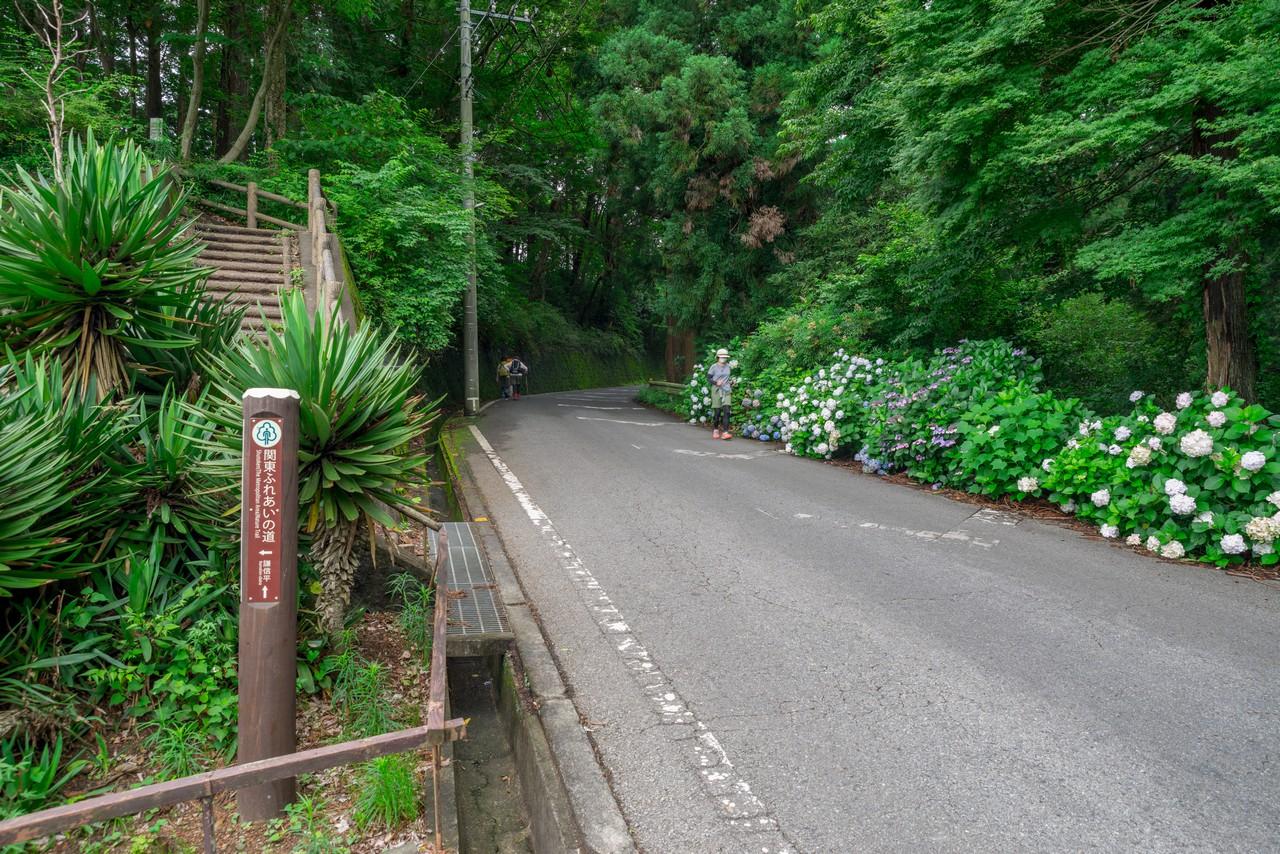 200705太平山-043