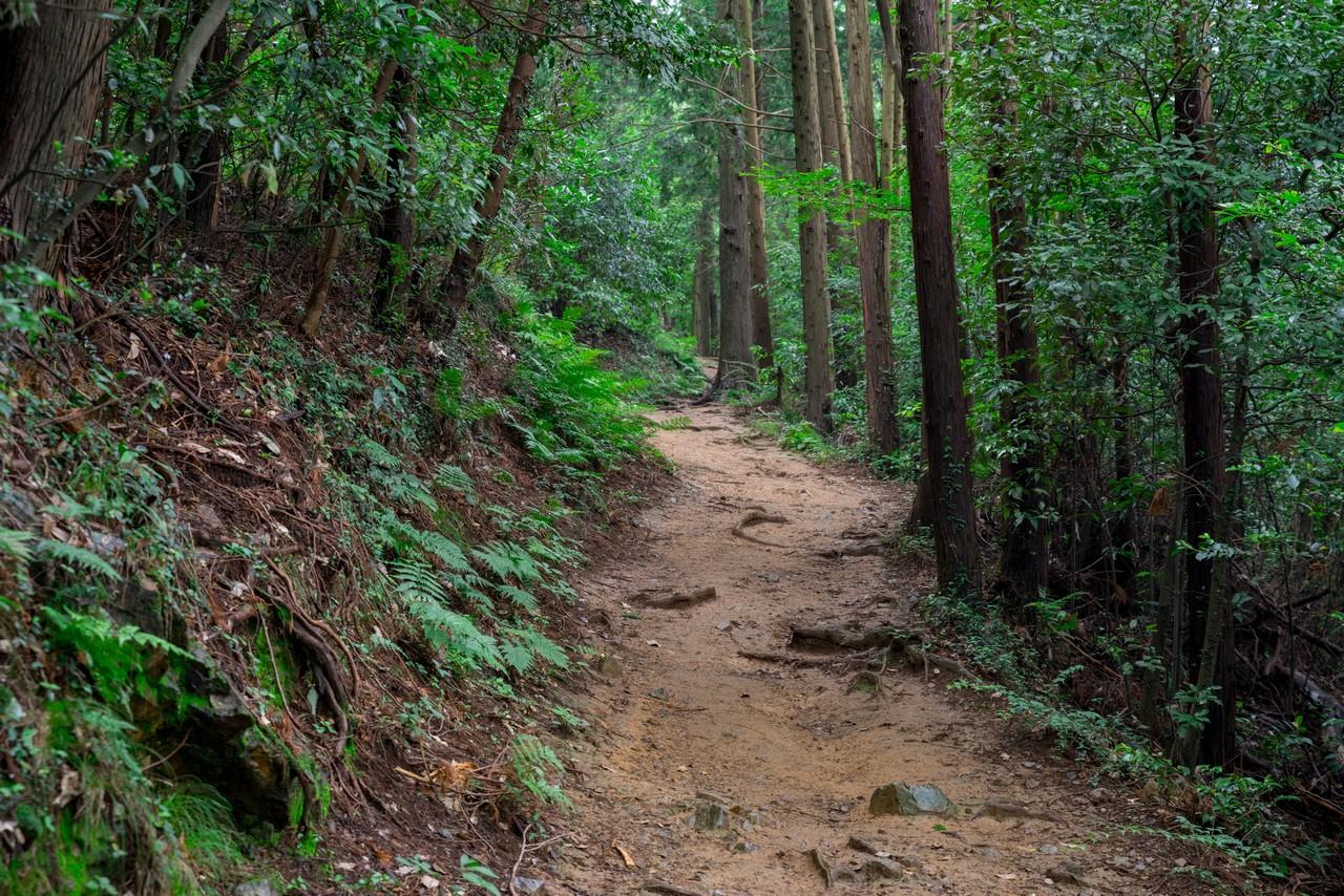 200705太平山-062