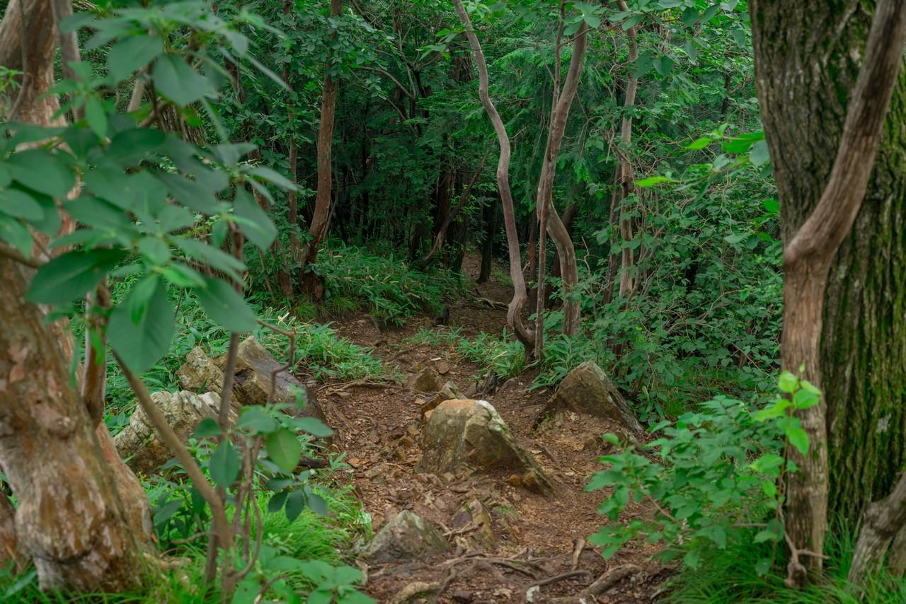 200705太平山-083
