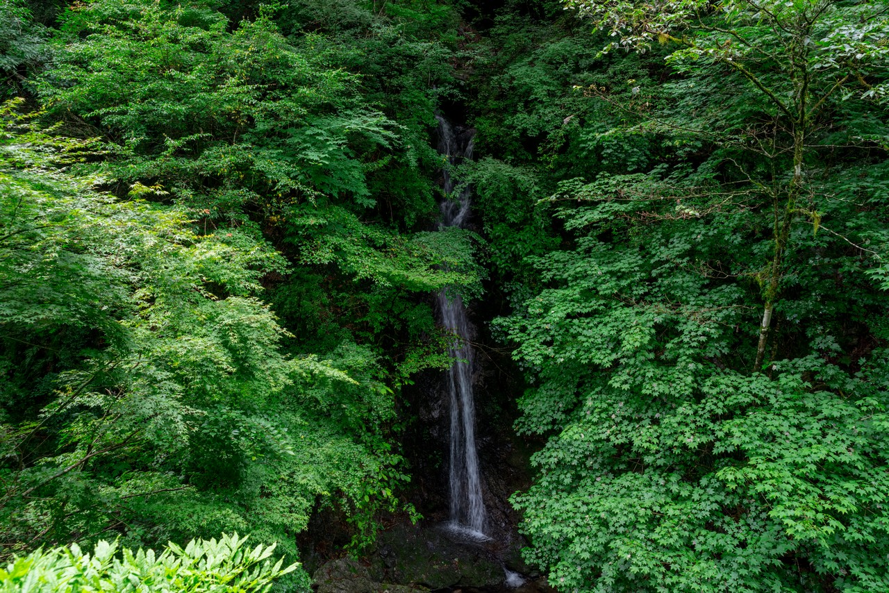 200712大岳山-029