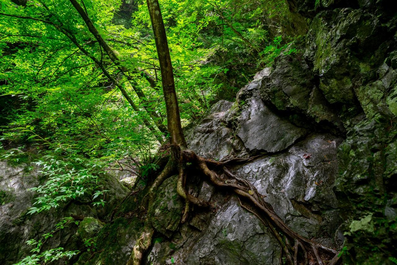 200712大岳山-047