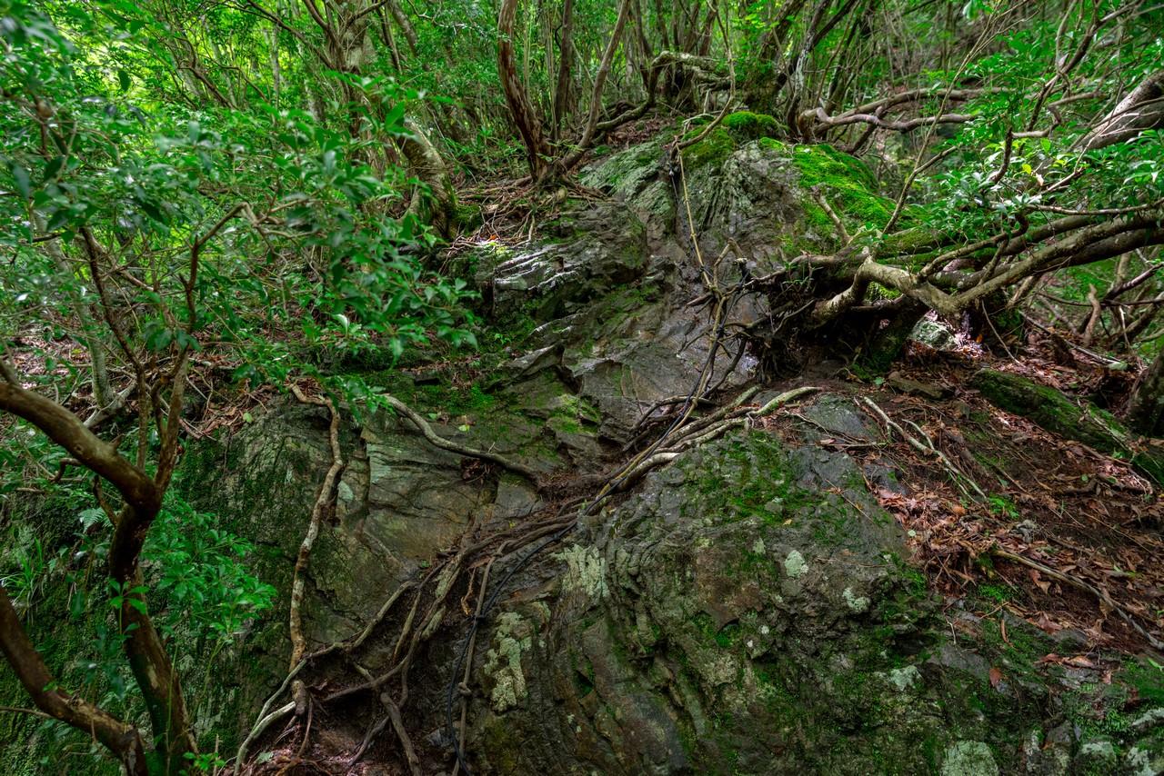 200712大岳山-053
