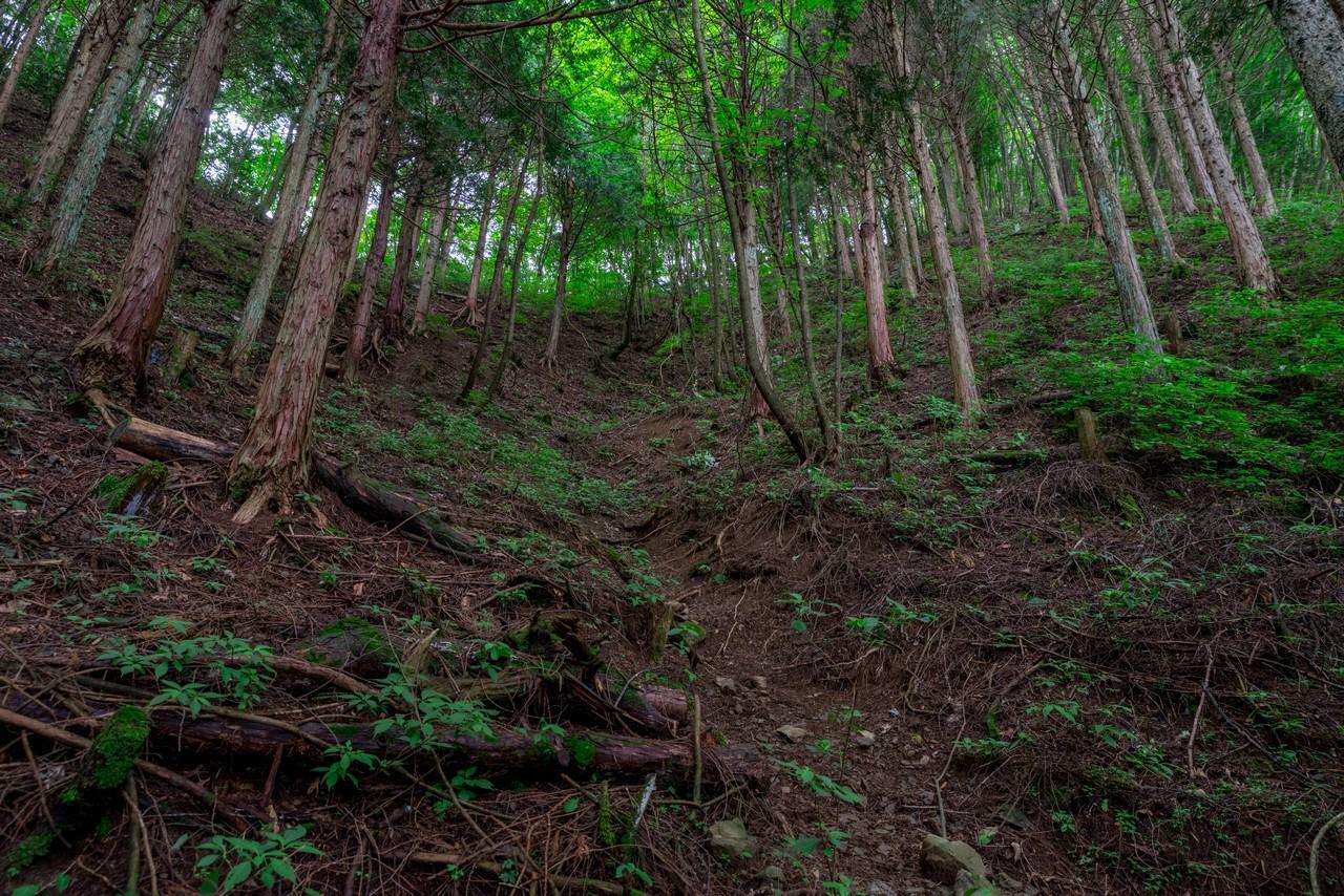200712大岳山-074