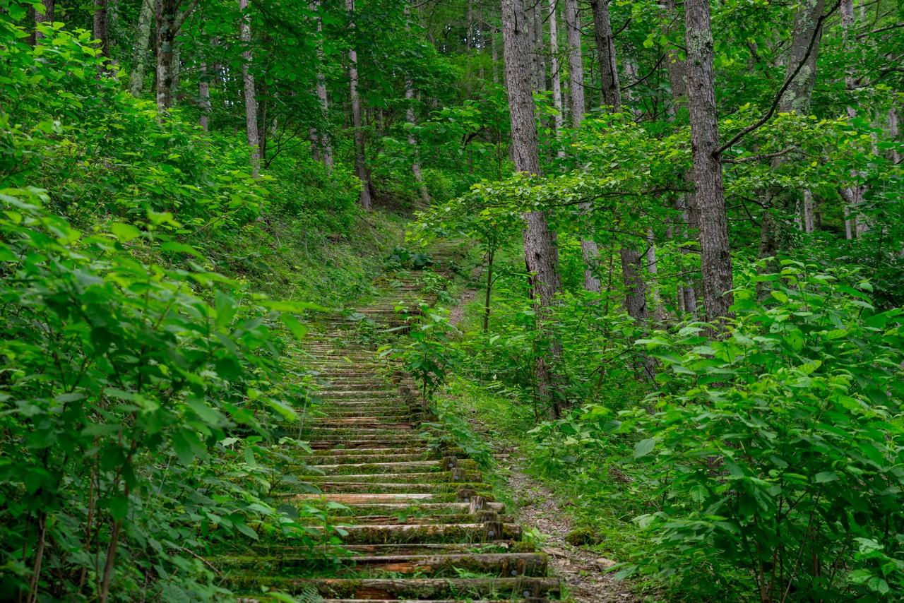200719雨乞岳-022