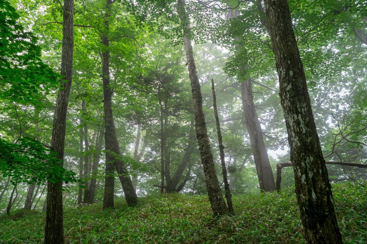 200719雨乞岳-025