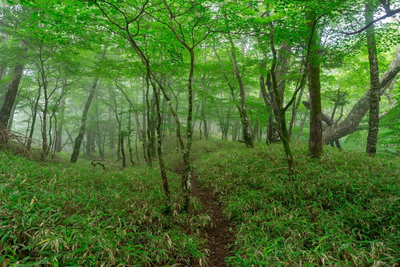 200719雨乞岳-026